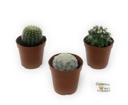 """FlowerPotNursery Round Barrel Circular Cactus spp. Cacti Mix 2"""" Pot 3 Pack"""