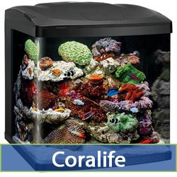 coralife-cat.jpg