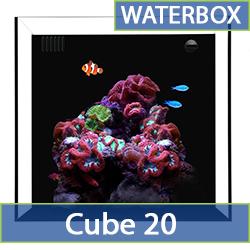 cube-20-cat.jpg