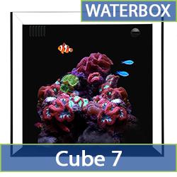 cube-7-cat.jpg