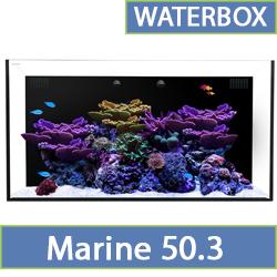 marine-50.3.jpg