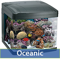 oceanic-cat.jpg