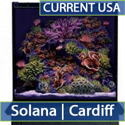 solana-cat-2.jpg