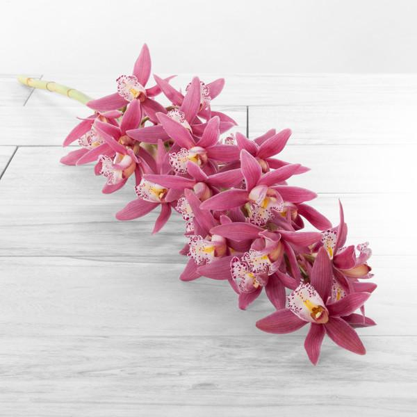 Cymbidium Stems Petite blooms