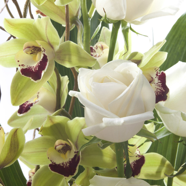 Orchid + Roses  | White