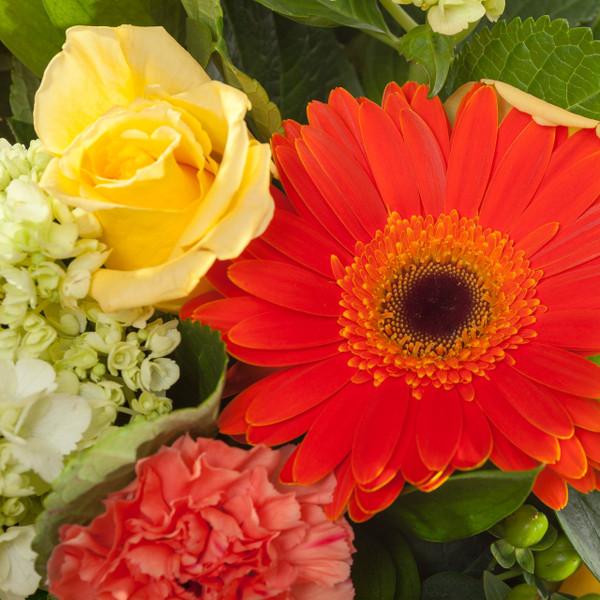 Enchanted Roses - Yellow