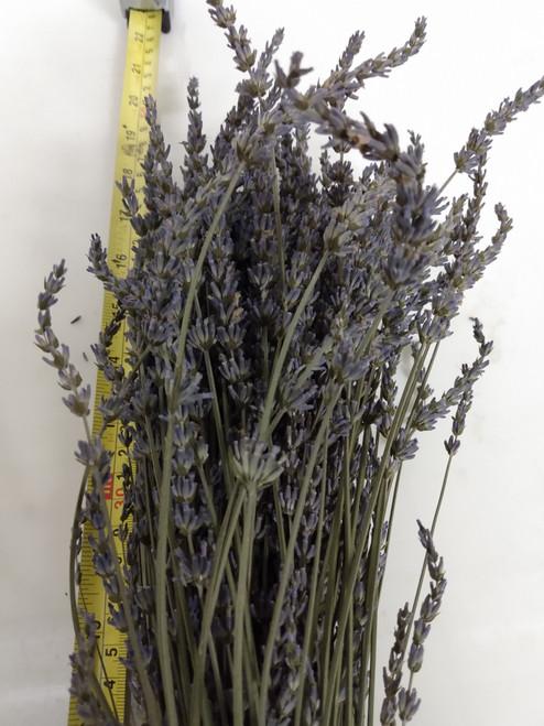 Long Stem Dried Lavender