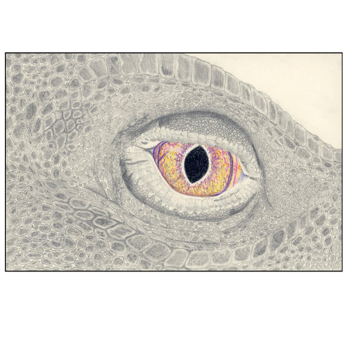 Dragon Eye print
