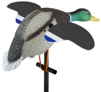 Lucky Duck Lucky Junior II 6v