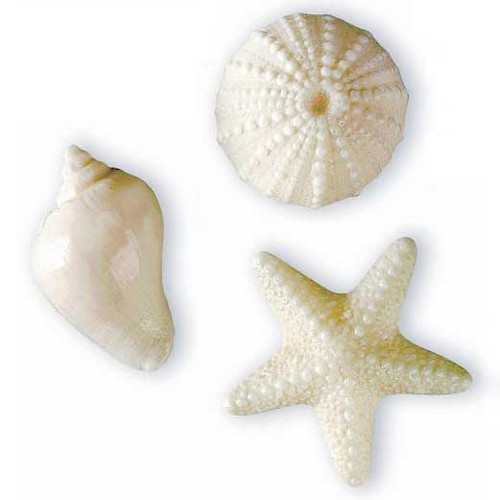 Novelty Soap White Shell Assortment 3 Pack 40-425