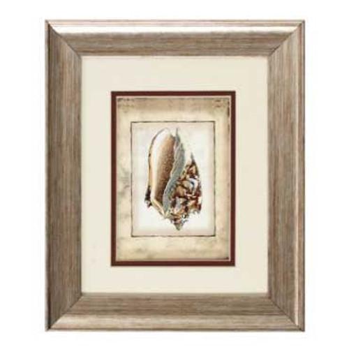 """Sea Shell Framed Art Print 11"""" x 13"""" - Rustic Shell II – 1104-II"""