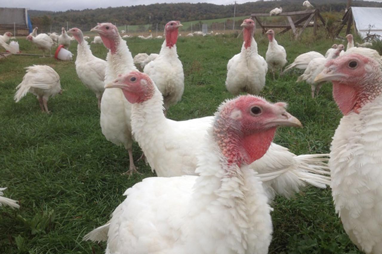 Halal Farms Turkeys