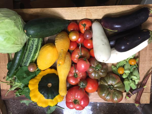Weekly Farm Share Program