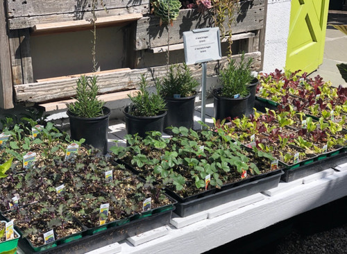 Edibles/herbs/veggies