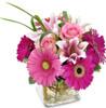 HCMC Pretty Pink Petals
