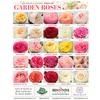 Garden Roses - 10 Stem Bunch