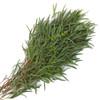 Eucalyptus - Assorted Varities -Sold Per Bunch