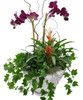 Orchids & Ivy Planter