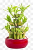 Lucky Bamboo Planter - Custom Made