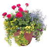Outdoor Awesome Combo Patio Pot- Local Delivery Only