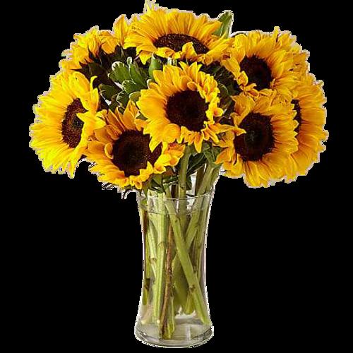 12 Stem Honey Bee Sunflowers Bouquet