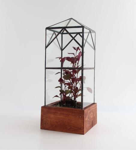 North Tower Terrarium by Leadhead Glass