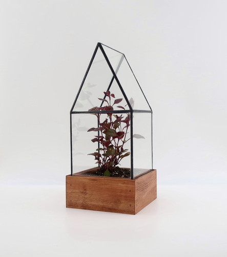Cape Cod Terrarium by Leadhead Glass