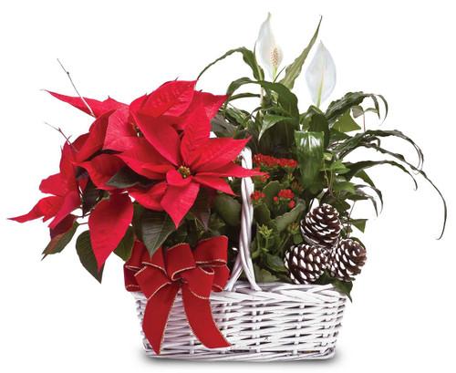 Poinsettia Garden Basket