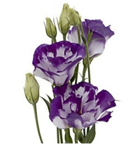 Lisianthus 10 Stem Bunch  LOCAL/MPLS DELIVERY ONLY