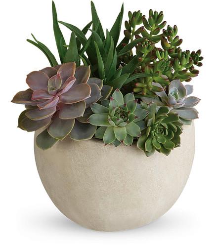 Custom Succulent Garden (Assorted Sizes Avaialble)