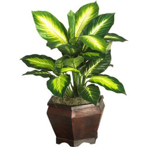 Desk Plant Deiffenbachia