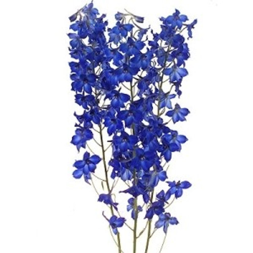 Belladonna Delphinium 10 Stem Bunches