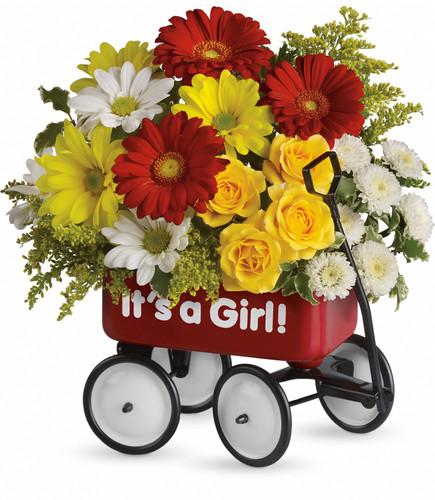 Baby's Wow Wagon Girl- Maple Grove