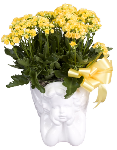 Soderberg's Exclusive Angel Planter with Your Choice Blooming