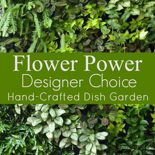 Florist Designed Dish Garden
