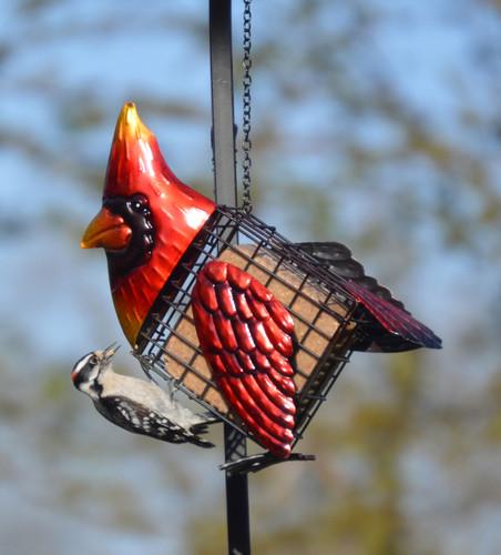 Cardinal Suet Feeder