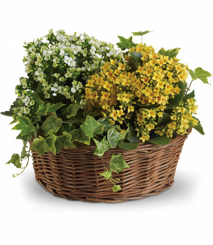 Basket of Joy