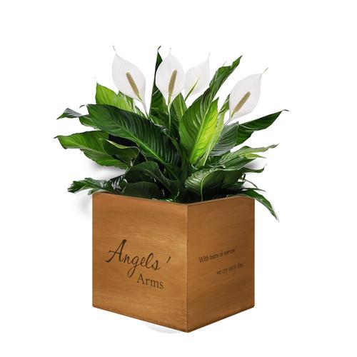 """Angels' Arms"" Keepsake Box/Planter"