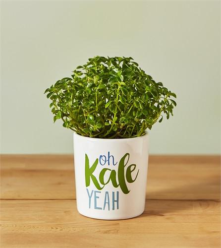 Oh Kale Yeah Mini Planter
