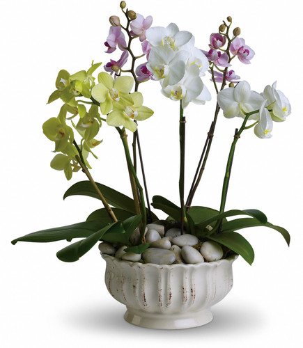 Regal Orchid Planter
