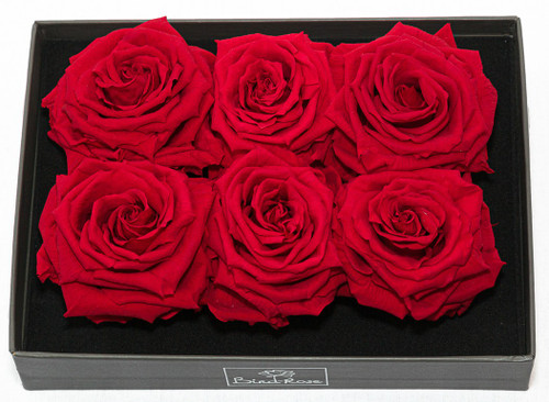6 Real Red Roses - Preserved Lasts Forever
