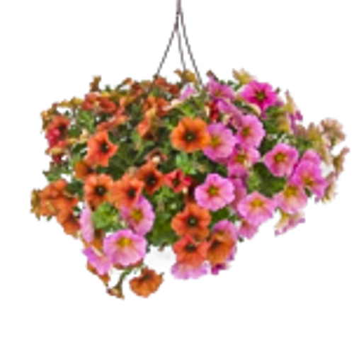 Outdoor Hanging Annual Baskets |  Calibrachoa Mixes  Mpls/St Paul  Delivery Only