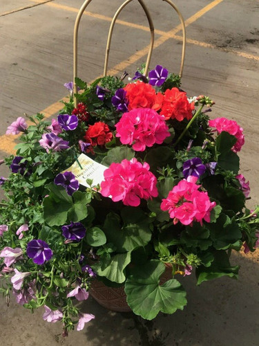 """17"""" to 20""""  Outdoor Hand Planted  JUMBO Combo  Patio Pot  