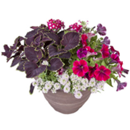 """12"""" Roundabout Oxford Patio Pot  