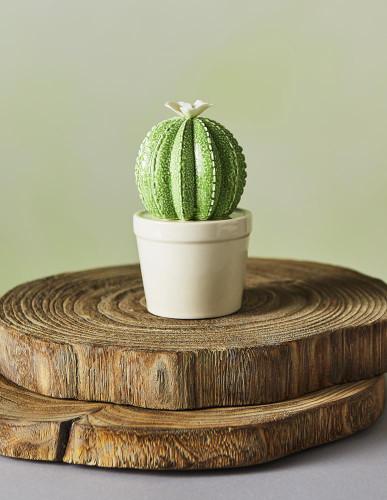 Ceramic Flowering Ball Cactus