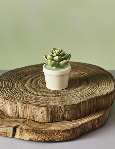 Ceramic Dark Green Hen and Chicks Cactus