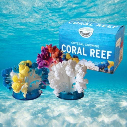 Crystal Growing Coral Reef