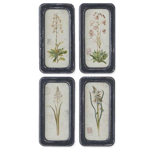 """14"""" Black Framed Assorted Botanical Prints- Set of 4"""