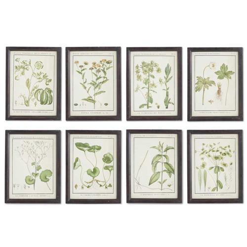 """13""""  Leafy Botanical Prints in Black Wood Frames Set of 8"""