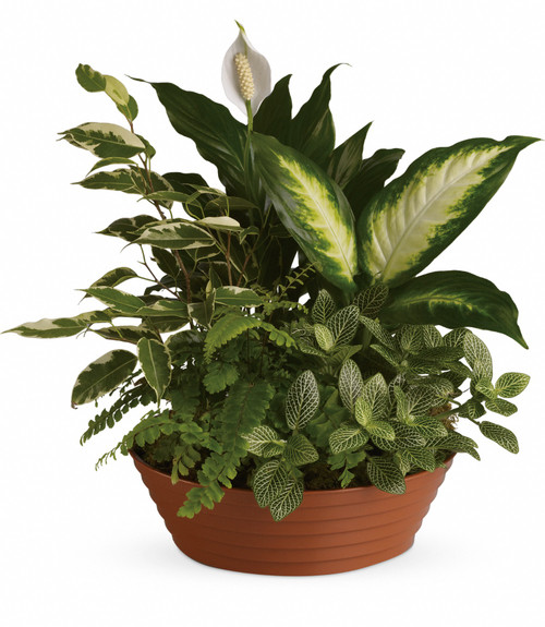 HCMC Serene Retreat Gift Plant